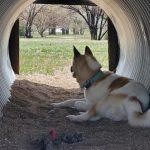 Private Dog Park